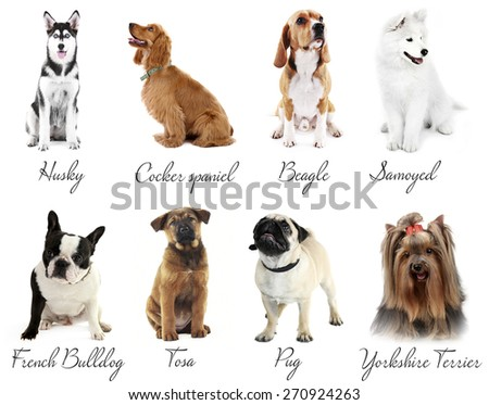 Different breeds of dogs - stock photo