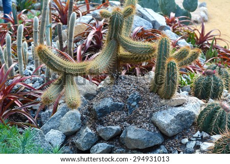 Different cactus and other plants in a botanical garden in Rio de Janeiro, Brazil. - stock photo
