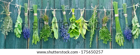 different fresh herb bundles hanging in front of a wooden wall  - stock photo