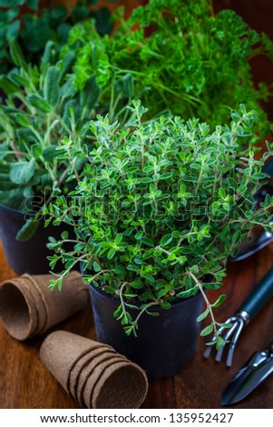 Different herbs for planting with garden tools - stock photo