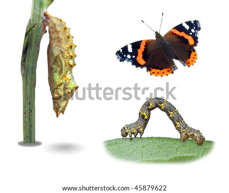 Different insects life-forms (pupa, larva, imago) - stock photo