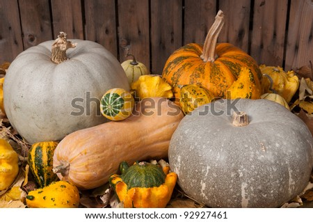 Different kind of pumpkins and winter squashes - stock photo