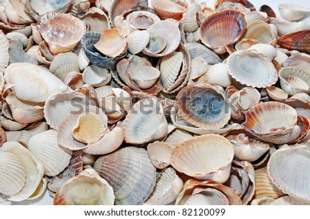 Different kind of sea shells - stock photo