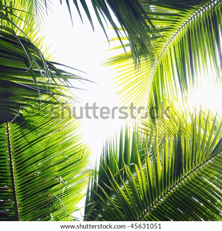 Different palm tree leaves in various green tones and shades - stock photo
