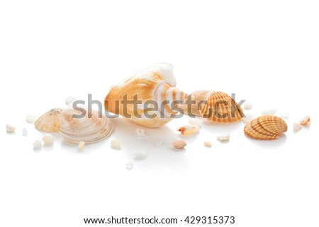 Different  seashells  and  pebbles isolated on white background.   - stock photo