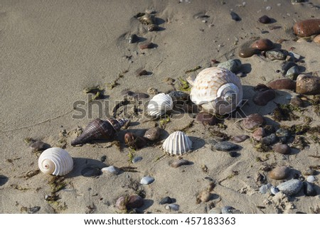 Different shells on the sand, sea background and texture - stock photo