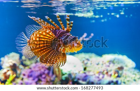 Different small tropical fish in coral reef underwater - stock photo