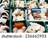 Different species of edible mushroom in containers at the market. - stock photo
