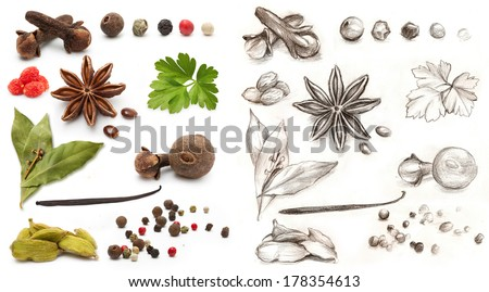 Different spices and herbs isolated on white background and hand drawing - stock photo
