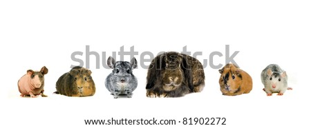 Different spieces of rodents - stock photo