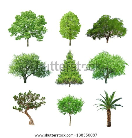 different tree set isolated on white - stock photo