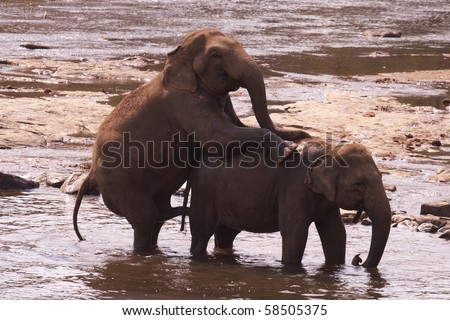 different view of pinnawela elephant orphanage - stock photo