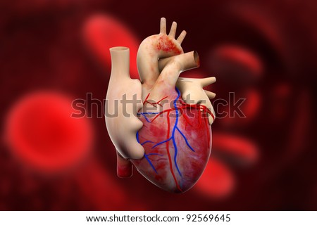 digital illustration of a human heart in digital background - stock photo