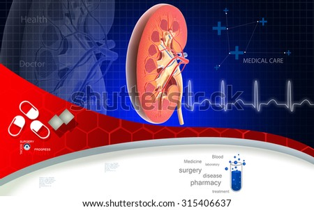 Digital illustration of   Cross section kidney in colour  background  - stock photo