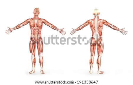 digital illustration of the anatomy of the human body and skeleton - stock photo