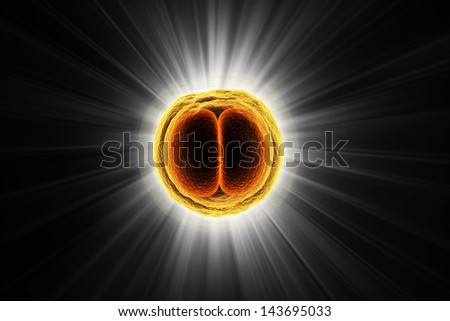 Digital illustration of Zygote Cell in color background - stock photo