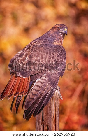 Digital oil painting of a red tailed hawk on roost - stock photo
