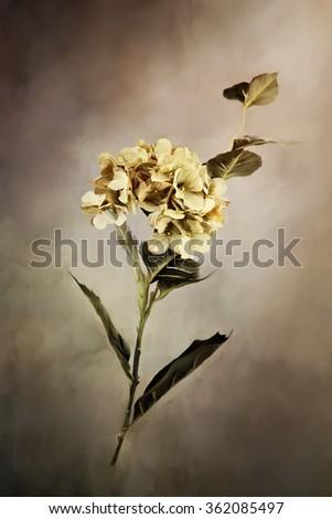 Digital painting of a beautiful hydrangea flower. - stock photo