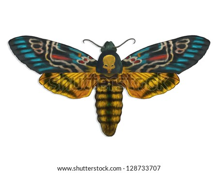 digital painting of a colorful death's head moth spreading its wings - stock photo