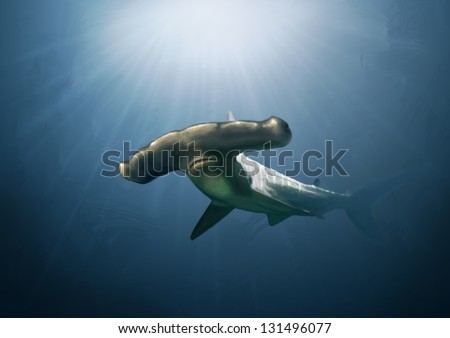 Digital painting of a large scalloped hammer head shark. - stock photo