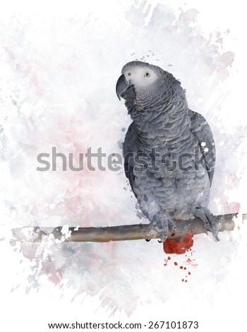 Digital Painting Of African Grey Parrot - stock photo