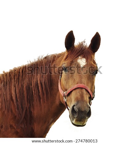Digital Painting Of Brown Horse Head - stock photo