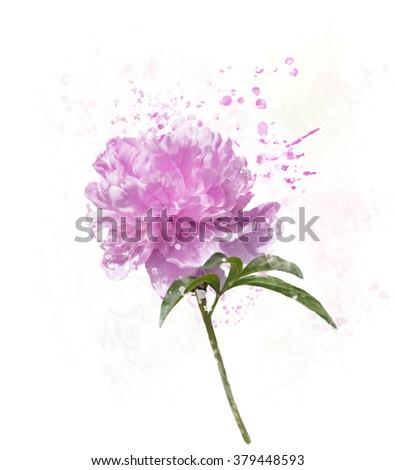 Digital Painting of Peony Flower - stock photo