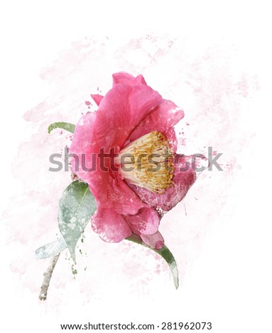 Digital Painting of Pink Rose  - stock photo