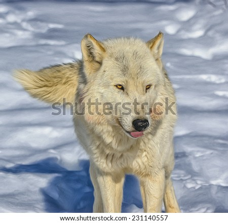 Digital painting of white timber wolf - stock photo