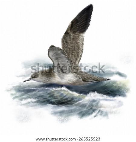 Digital watercolor of a balearic shearwater - stock photo