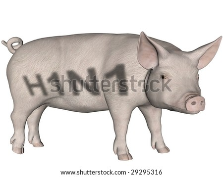 Digitally created word H1N1 on a rendered pig over white. - stock photo