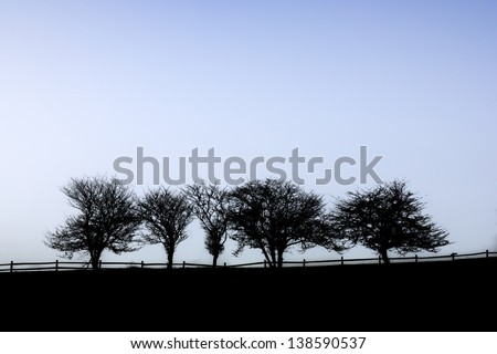 Digitally enhanced silhouetteted row of trees on a foggy morning, Stowe, Vermont, USA - stock photo