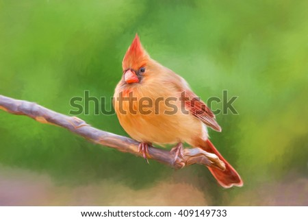 Digitally hand painted photo of a female cardinal on a tree branch. - stock photo