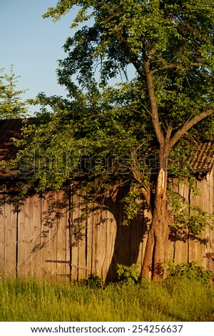Dilapidated old wooden shack tree shadow on boards, warm color tonation in vertical orientation, nobody.  - stock photo