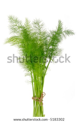 Dill Bouquet Tied With String Isolated on White - stock photo