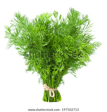 Dill herb closeup isolated on white background - stock photo