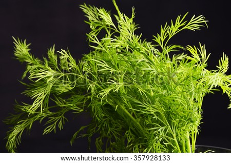 dill on black background - stock photo