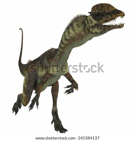 Dilophosaurus Dinosaur over White - Dilophosaurus was a theropod carnivorous dinosaur that lived in the Jurassic Period of Arizona. - stock photo