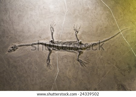 Dinosaur fossils - stock photo