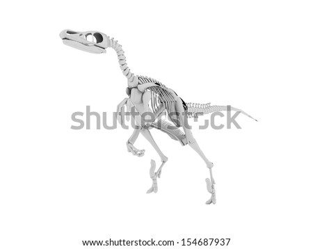 Dinosaur skeleton isolated on white background - stock photo