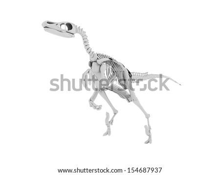 Dinosaur skeleton isolated on white background - stock photo