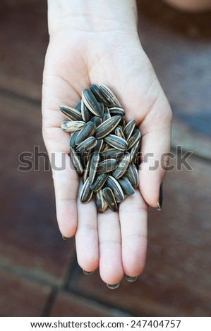 Dired sunflower seeds - stock photo