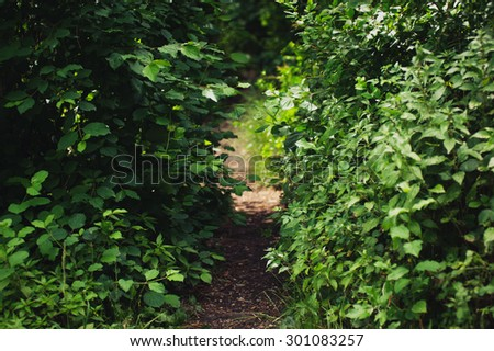 Dirt path trough forest, bushes. Nature shot, predominant colors green and brown. - stock photo