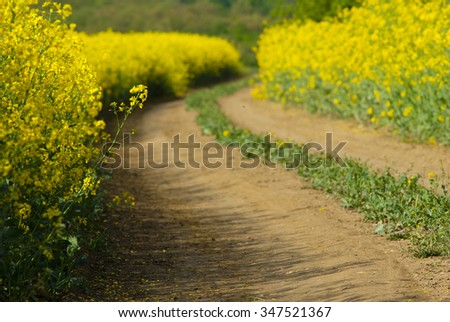 dirt road at rape fields - stock photo