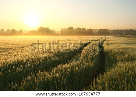 Dirt Road in a wheat field on a foggy spring morning. - stock photo