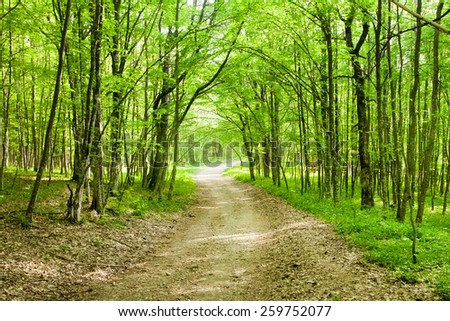 Dirt road in spring green forest - stock photo