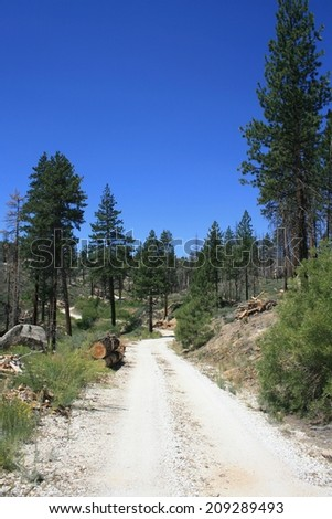 Dirt road leading through pines in the mountains, California - stock photo