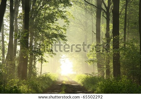 Dirt road leading through the deciduous forest on a misty spring morning. - stock photo