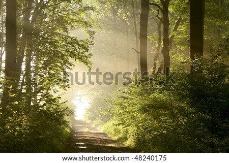 Dirt road through a misty forest with spring maple trees backlit by the rays of the rising sun. - stock photo