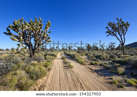 Dirt road through Joshua trees, Mohave National Preserve, CA. - stock photo